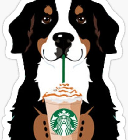 Bernese mountain dog and Starbucks  Sticker