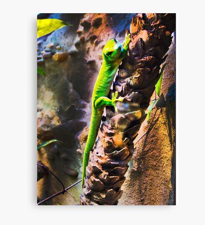 Lizard (psychedelic) Canvas Print