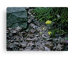 Brown Leaves and Yellow Daffodils Canvas Print