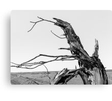 The Old Tree Canvas Print