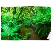 Oregon Rainforest 1118-11 Poster