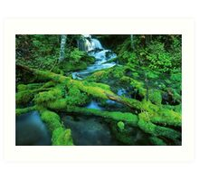 Washington Creek and Falls Art Print