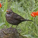 Spring... birds and flowers by Thea 65