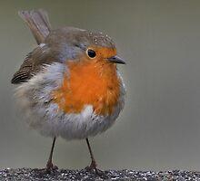 I heard a robin this mornin'.... by Thea 65