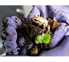 Whistling Brown Tree Frog - NZ Photographic Print