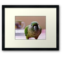 Mischievious Echo - Maroon-Bellied Conure Framed Print
