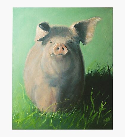 Pig in the grass Photographic Print