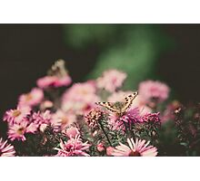 Pink Flowers with Butterfly Filtered 2 Photographic Print