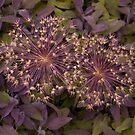 Sage, with sparkle by Jennifer Bradford