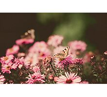 Pink Flowers with Butterfly Filtered 3 Photographic Print