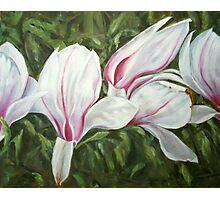 Magnolia III Photographic Print