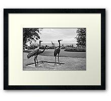 Brolgas—Government House Tasmania Framed Print
