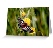 A Red Dotted Checkerspot Greeting Card