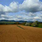 Rural scenery by annalisa bianchetti