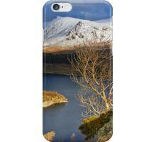 Haweswater Tree iPhone Case/Skin