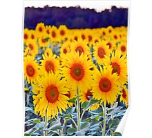Fields of Sunflowers Poster