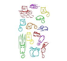 Jelly Bean Cats Photographic Print