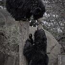 Black Bear's Kiss by anorth7
