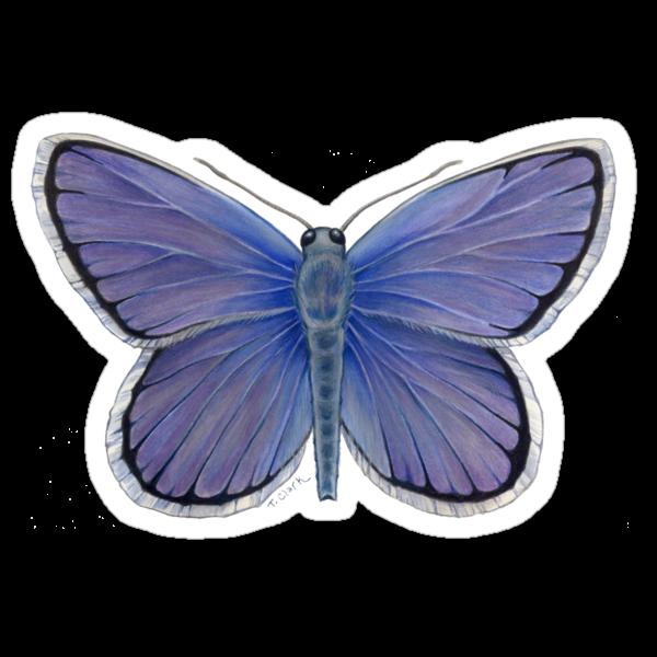 Karner Blue Butterfly by Tamara Clark
