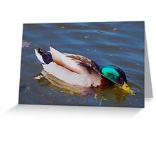 2016 Duck Greeting Card