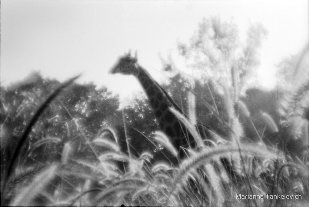 giraffe by Marianna Tankelevich