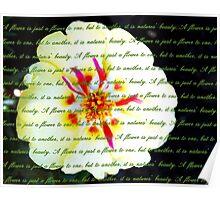 Moss Rose Portulaca Poster