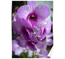 Sweet Little Pink Orchids Poster