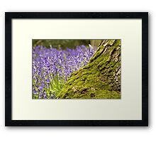 In the woods today  Framed Print