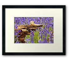 Old rotten wood in bluebell wood  Framed Print