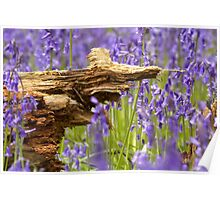 Old rotten wood in bluebell wood  Poster