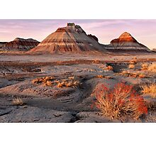 Petrified Forest National Park Photographic Print