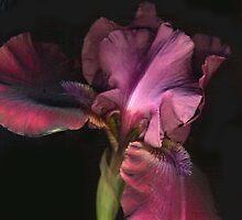 Dark Iris by Barbara Wyeth