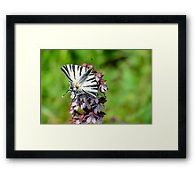 Swallowtail butterfly on an orchid, Paciano, Umbria, Italy Framed Print