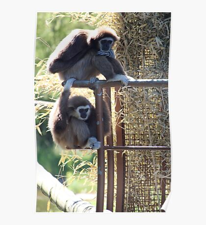 Monkeys animal print Poster