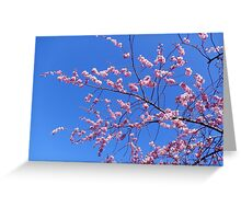 Spring is in the Air. Greeting Card