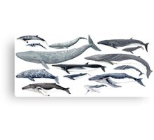 Whales and baby whales Canvas Print