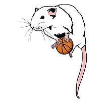 Basketball Rat Photographic Print