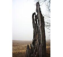 Rustic Texture Photographic Print