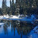 Cool Blue Shadows - Riverbank Winter Forest by Georgia Mizuleva