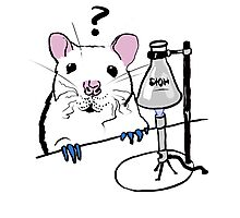 Chemistry Rat Photographic Print