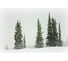 Bleak Winter Landscape Photographic Print