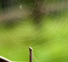 Spiderweb on Barbed Wire Sticker