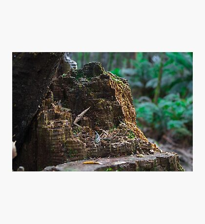 Tree Stump Photographic Print