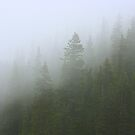 Pine Forest in the Fog by rwhitney22