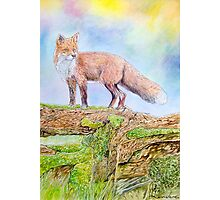 The fox in the woods Photographic Print