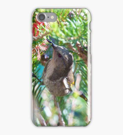 Crescent Honeyeater iPhone Case/Skin