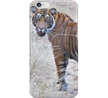 Young Male Tiger on The Prowl iPhone Case/Skin
