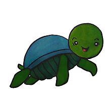 Little Turtle Photographic Print