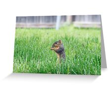 Squirrel sitting up in tall grass Greeting Card