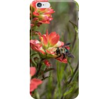 Bumble Bee on bright pink Indian Paintbrush flowers iPhone Case/Skin